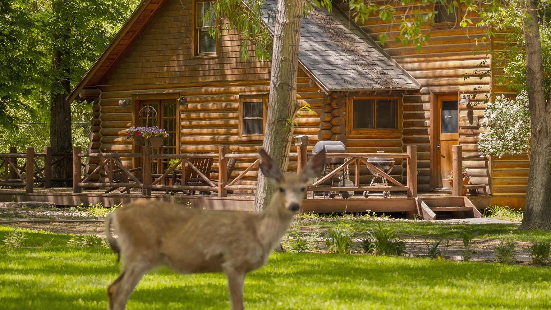 ennis log cabin rental