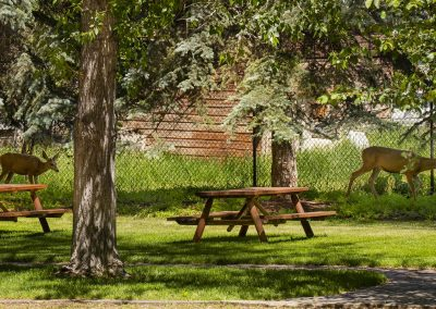 ennis montana deer picnic tables